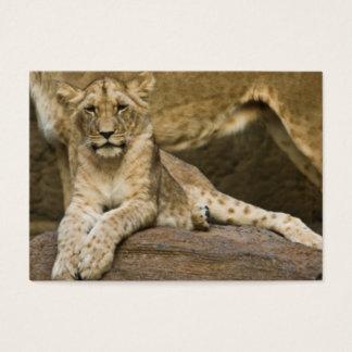 Lion Cub 2011 Pocket Calendar (UK) Business Card