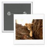 Lion Cub 2 Inch Square Button