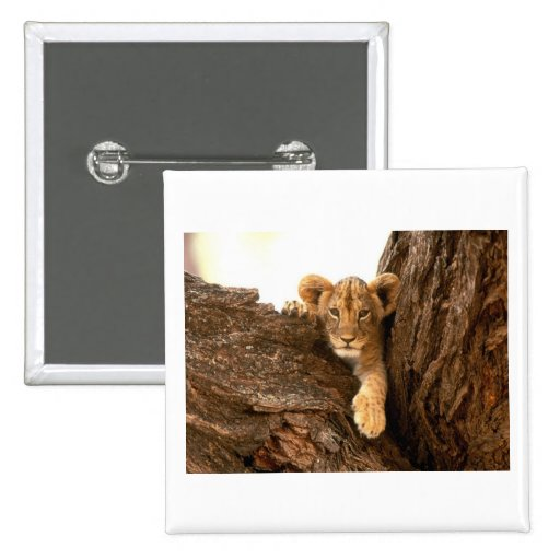 Lion Cub 2 Inch Square Button