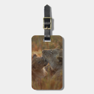 Lion cub aged about 12 months playing luggage tag