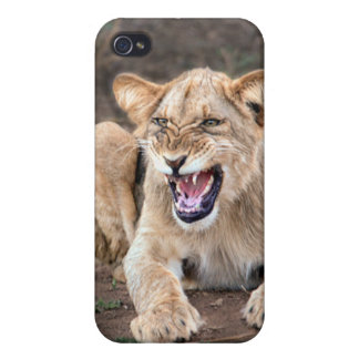 Lion cub baby iPhone 4 cases