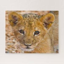 Lion Cub Big Cats. Jigsaw Puzzle