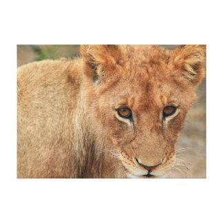Lion Cub Canvas Prints