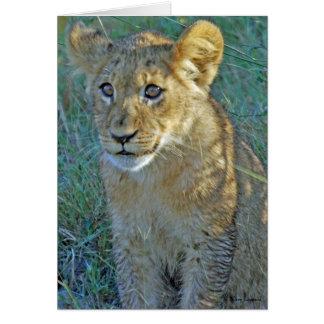 LION CUB CARD SERIES