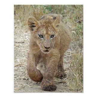 Lion Cub Close-up Photo Art