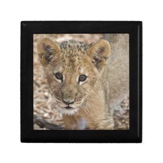 lion cub trinket boxes