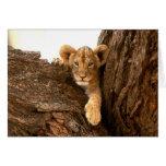Lion Cub Greeting Card