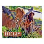 Lion Cub Head Stuck Poster