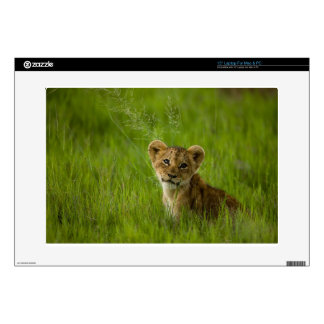"Lion Cub In The Tall Grass 15"" Laptop Skin"