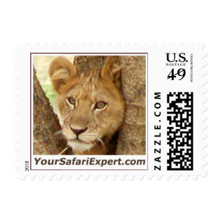 Lion Cub in Tree Postage Stamp (SMALL)