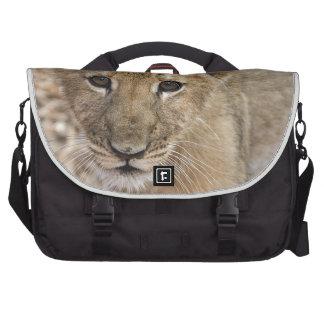 lion cub laptop messenger bag