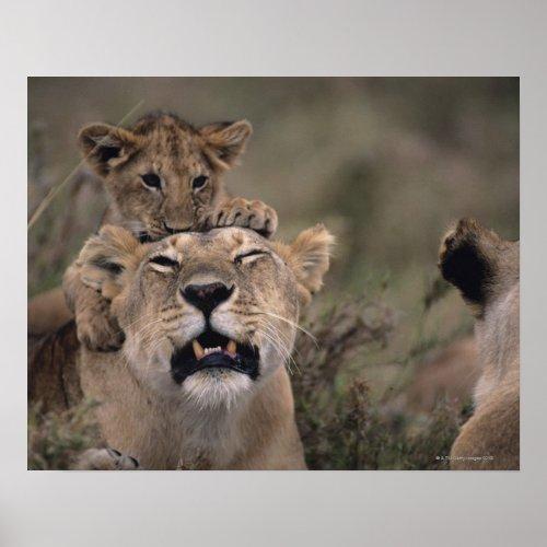 Lion  Cub  Masai Mara National Reserve Poster