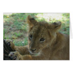Lion Cub Note Card 3