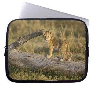 Lion cub on log, Panthera leo, Masai Mara, Kenya Laptop Sleeve