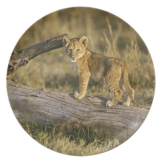 Lion cub on log, Panthera leo, Masai Mara, Kenya Melamine Plate