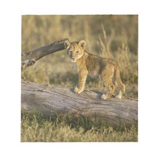 Lion cub on log, Panthera leo, Masai Mara, Kenya Notepad