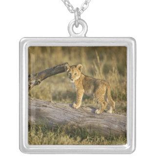 Lion cub on log, Panthera leo, Masai Mara, Kenya Silver Plated Necklace
