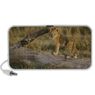 Lion cub on log, Panthera leo, Masai Mara, Kenya Speaker