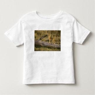 Lion cub on log, Panthera leo, Masai Mara, Kenya Toddler T-shirt