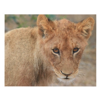 Lion Cub Panel Wall Art