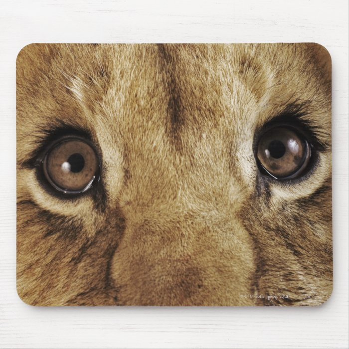 Lion cub (Panthera leo) licking nose, close-up Mouse Pad