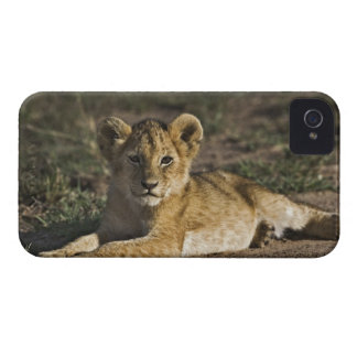 Lion cub, Panthera leo, lying in tire tracks, Case-Mate iPhone 4 Cases