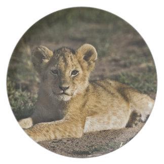 Lion cub, Panthera leo, lying in tire tracks, Melamine Plate