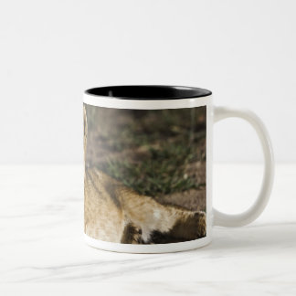 Lion cub, Panthera leo, lying in tire tracks, Two-Tone Coffee Mug