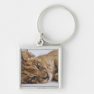 Lion cub (Panthera leo) lying on side, close-up Keychain
