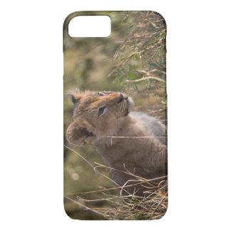 Lion cub (Panthera leo), Masai Mara National iPhone 8/7 Case
