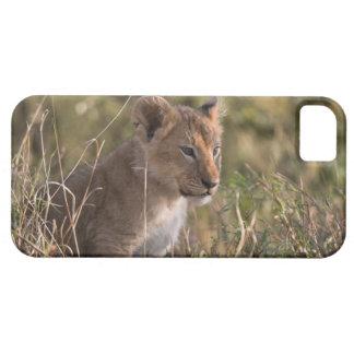 Lion cub (Panthera leo), Masai Mara National iPhone SE/5/5s Case