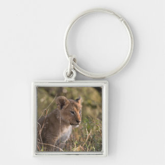 Lion cub (Panthera leo), Masai Mara National Keychain