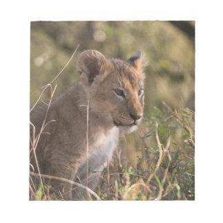 Lion cub (Panthera leo), Masai Mara National Notepad