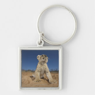 Lion Cub (Panthera Leo) sitting on sand, Namibia Keychain