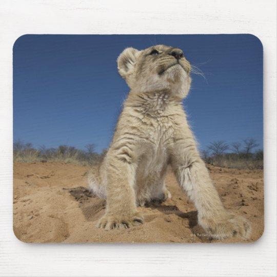 Lion Cub (Panthera Leo) sitting on sand, Namibia Mouse Pad