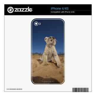 Lion Cub (Panthera Leo) sitting on sand, Namibia iPhone 4 Decals