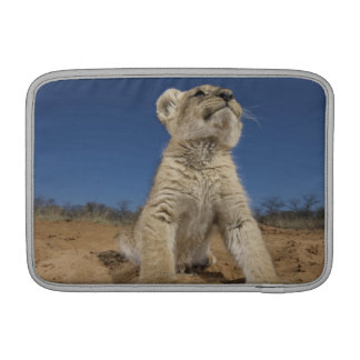 Lion Cub (Panthera Leo) sitting on sand, Namibia Sleeve For MacBook Air