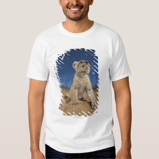 Lion Cub (Panthera Leo) sitting on sand, Namibia T-Shirt