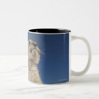Lion Cub (Panthera Leo) sitting on sand, Namibia Two-Tone Coffee Mug