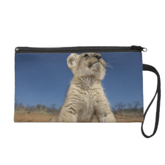 Lion Cub (Panthera Leo) sitting on sand, Namibia Wristlet Purse