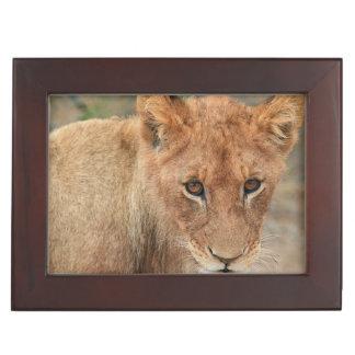 Lion Cub Memory Boxes