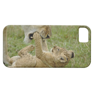 Lion cub playing with female lion, Masai Mara iPhone 5 Cases