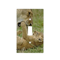 Lion cub playing with female lion, Masai Mara Light Switch Cover