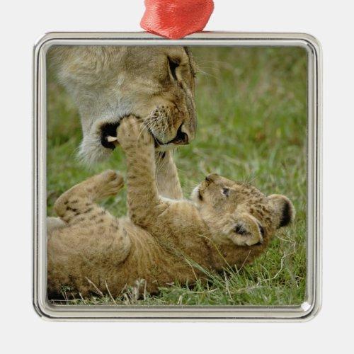 Lion cub playing with female lion Masai Mara Metal Ornament