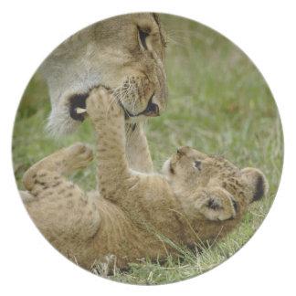 Lion cub playing with female lion, Masai Mara Dinner Plates