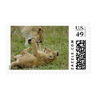 Lion cub playing with female lion, Masai Mara Postage