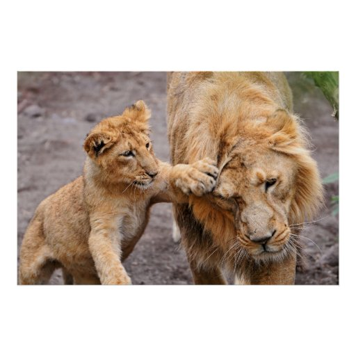 Lion Cub Playing with his Parent Print