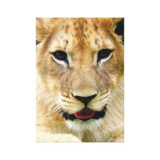 Lion cub portrait gallery wrapped canvas