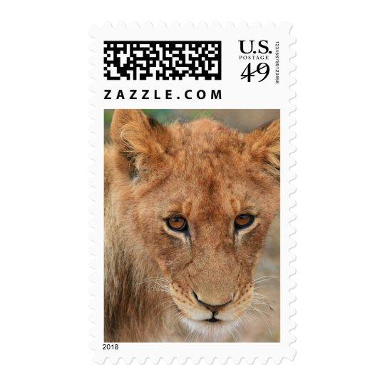 Lion Cub Postage