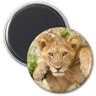 Lion Cub ROUND Magnet